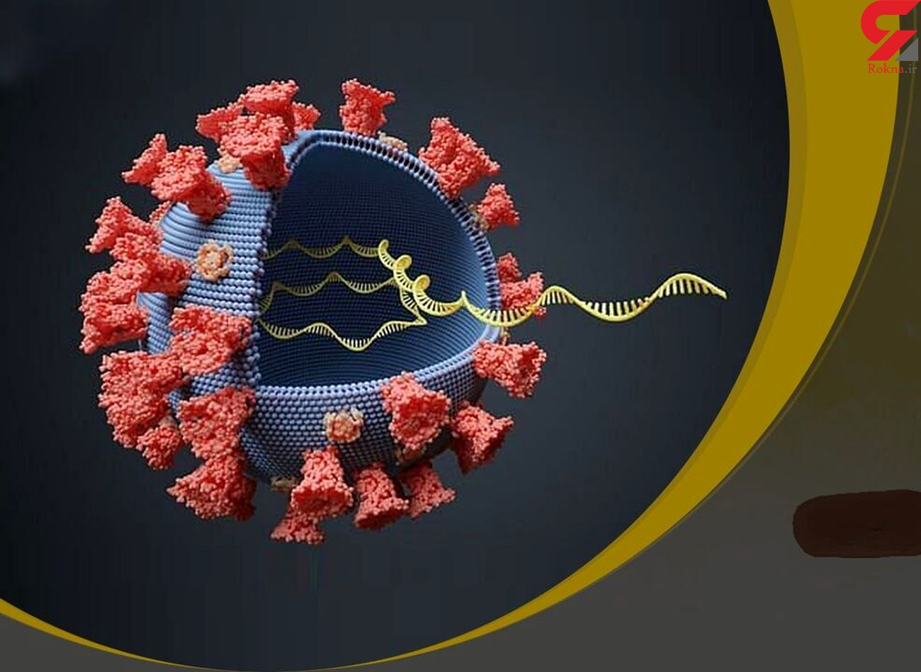 دو نوع جدید از ویروس کرونا در آمریکا شناسایی شد